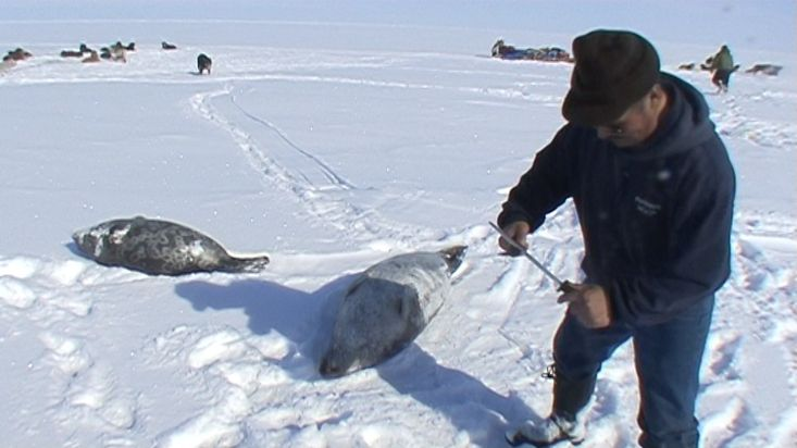 An Inuit quartering a seal with wich will feed to its sled dogs - Nanoq 2007 expedition