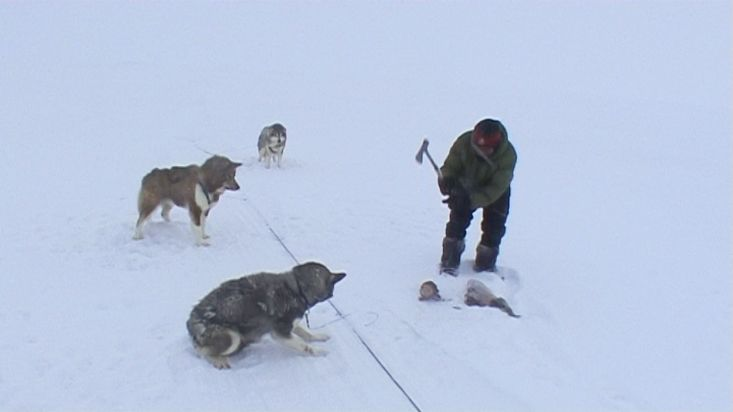 An Inuit quartering a seal to feed its sled dogs - Nanoq 2007 expedition