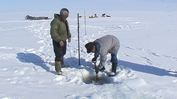 Inuit taking out seals that have fished with the net under the ice - Nanoq 2007 expedition