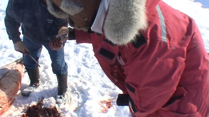 Inuit giving us liver of the seal with which they feed their dogs - Nanoq 2007 expedition
