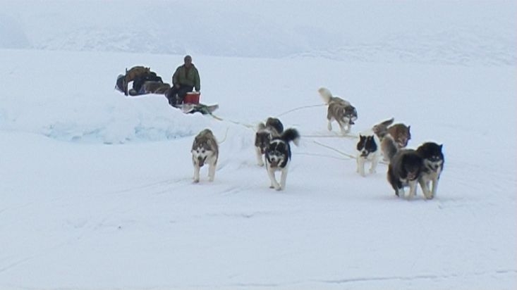 Dogsled arriving to the setting up camp area - Nanoq 2007 expedition