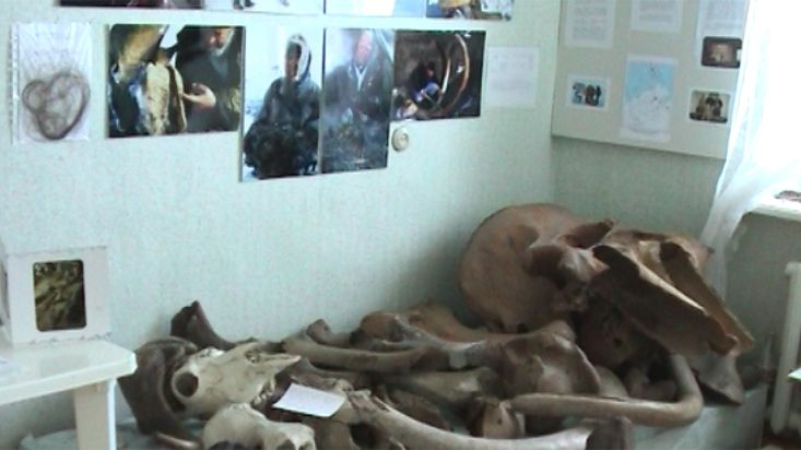 Remains of mammoths in the Khatanga museum - Geographic North Pole 2002 expedition