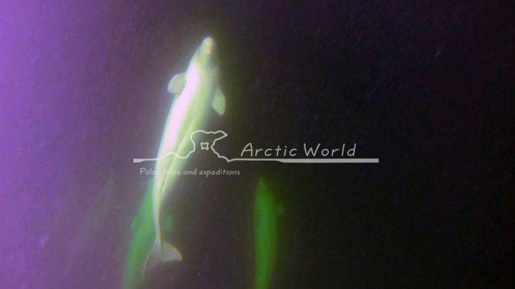 Arctic-world.com